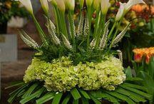 my lillies