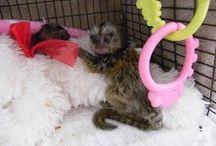 Monkeys / All about monkeys