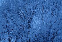 Winter Trees / Various shots of Winter Trees in Alberta