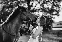 beautiful photo horses
