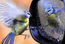 """Beautiful Birds / """"Observe intently the birds of heaven, because they do not sow seed or reap or gather into storehouses; still YOUR heavenly Father feeds them. Are YOU not worth more than they are?""""~~~ Matthew 6:26 / by Lady Jewels"""