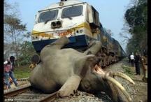 Save Elephant on railway track