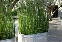 El Jardin  / Gardens & Patios / by Toni Cardenas