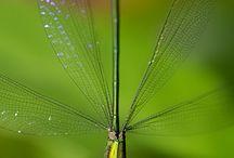 Insectos hermosos