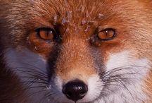 Animali / Scatti riguardanti animali