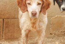 Perros seniors / Perros mayores de 9 años
