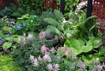Garden of the Shade... Hostas