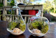 Amazing Terarium  Photos / Beautiful and  amazing Terarium  photos