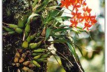 nicaragua garden