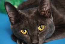 Pet Photography / www.anastasiahalikova.com/pet