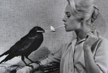 BIRDS /  a quiet obsession...