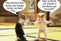 Humor - Tiere