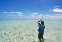 Fly Fishing Salt Water / Salt water fly fishing photos.  Saltwater body flyfishing only.