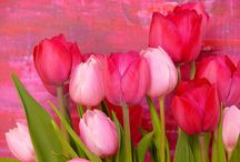 Tulips / Tulips are my favorite flower!! I think they are absolutely breathtaking! / by Jennifer Everly
