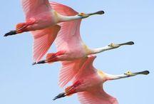 Фото - Птицы - В полете