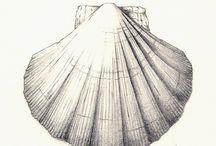 Seaside sketches