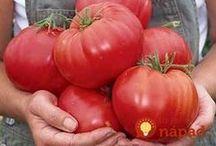 Zalivka na rajčata