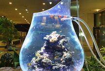 WOW Fish tanks / Fish tanks