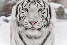 Animals / pets and wild creatures