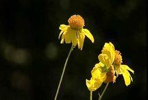 Spring Wildflower Show