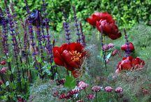 Palett - röd, lila, blå