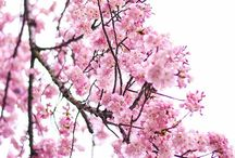 to print blossoms