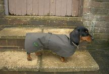 dachshund pix and dachshund daxi dog coats / daxi coats and accessories .. and cute pix