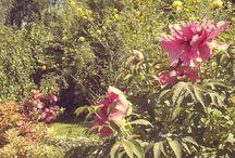 porter w ogrodzie / Ogrodowe inspiracje i pieskie życie w naturze, czyli codzienne perypetie ogrodnika i jego wiernego pomocnika.