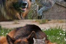 Honden en katten / animals