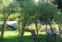 Ivy ogród