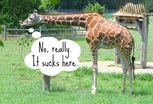 How To Help Animals In Captivity / Help animals suffering in zoos.