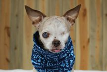 Famous Puppy Mill Dogs / by National Mill Dog Rescue
