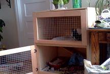 Bunnies:Bailey
