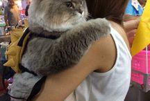 此れも猫?