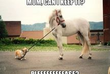 Pleeeeeeeeeeeease! / Horse and dog