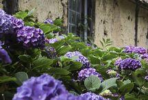 Virágok ,kertek...