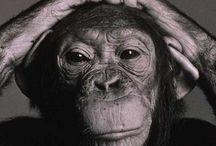 Animals / Monkey