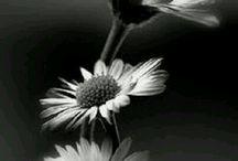 Flores Blaco y Negro