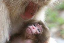 Primates, familia cercana.