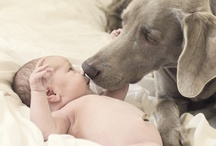 My Dogs / by Angie Stephens Jernigan