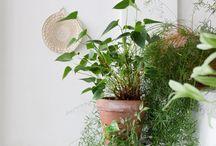 green-ish thumb / all things botanical / by Desiree Durso