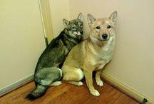 Animal Nonsense / by Sierra Cox