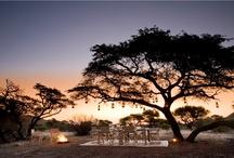 Safari and the African Bush