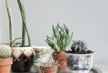 Botanic / byerhanoluk