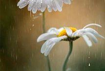 Doğanın süsü çiçekler