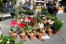 Viterbo, San Pelligrino in fiore 2017