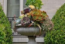Patio Gardening / by Tina Hacker