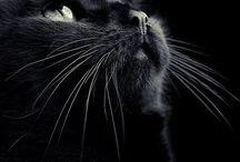 Black cats on black backgrounds