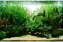 Aquascapes