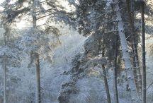Drenthe winter